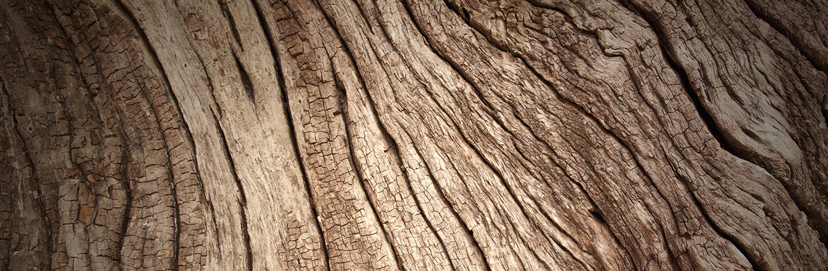 [Divider] [SRI] Tree bark